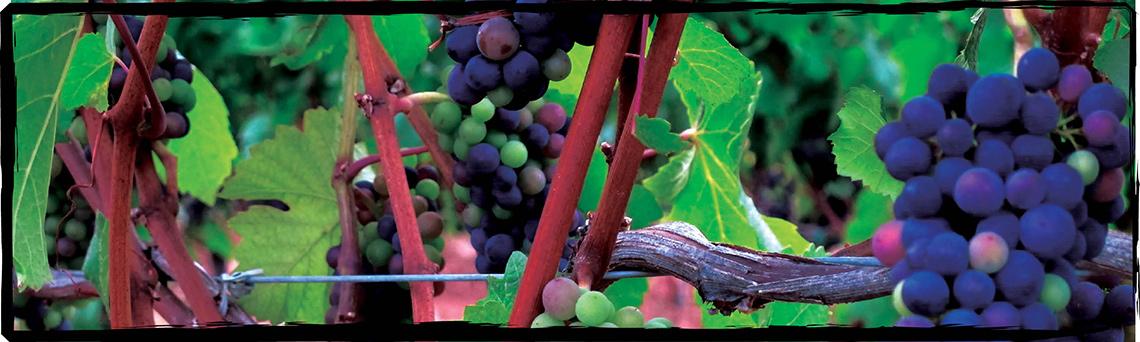 Harvest Wine Co